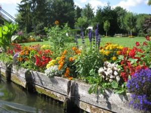 Flowers alongside the canal.