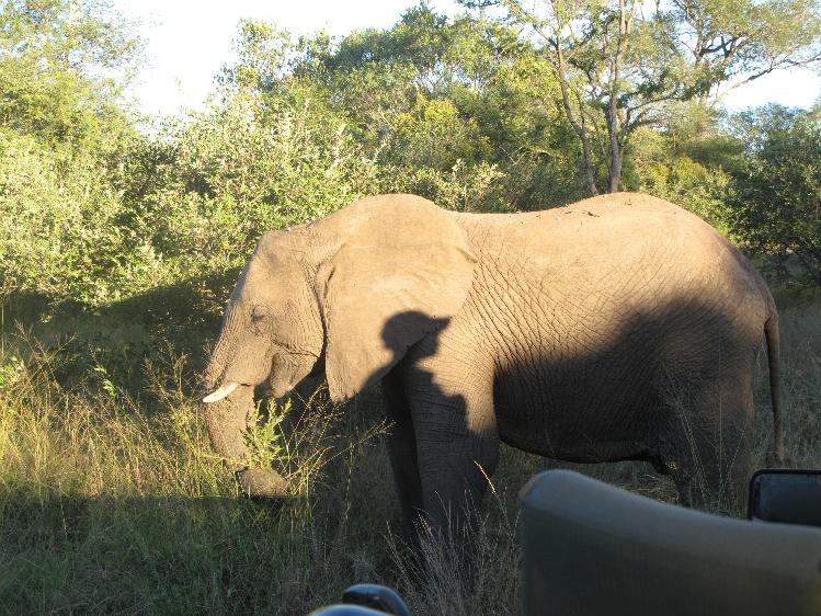 elephant1RESIZE