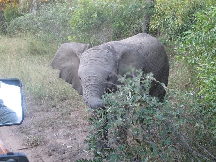 elephant3RESIZE