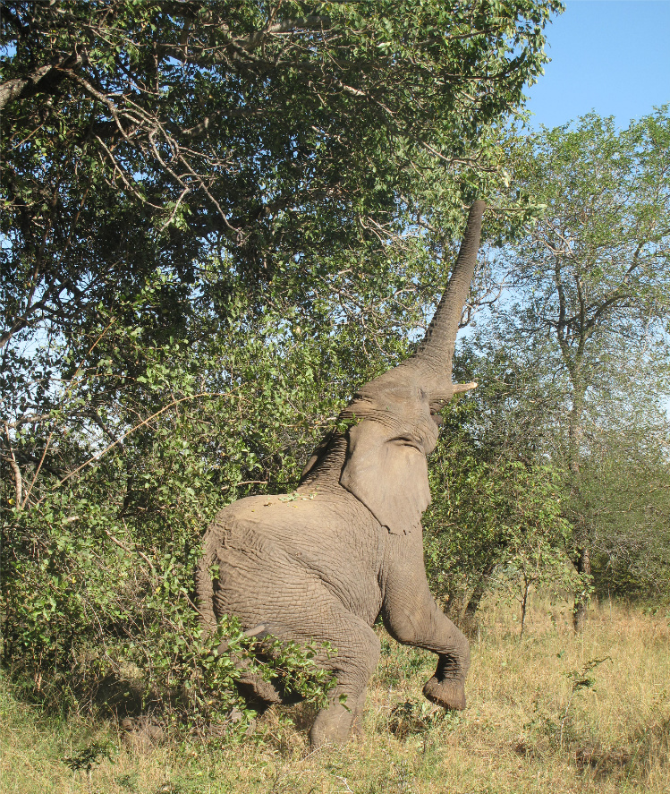 elephant4RESIZE