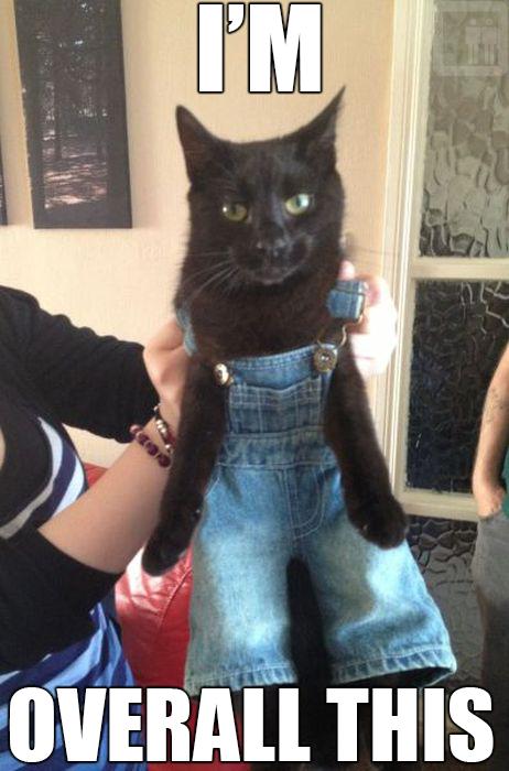 overallcat