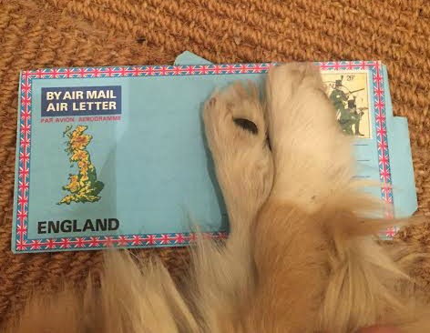 Edward the dog doesn't want you to see my old address.